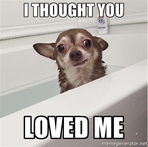 SadChihuahua Reaction Meme